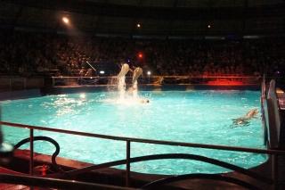 Pokazy delfinów w delfinarium w Hardewijk