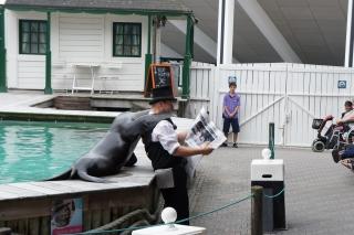Pokazy lwów morskich