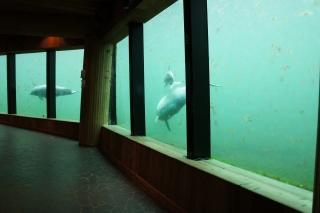 Delfiny przez szybkę