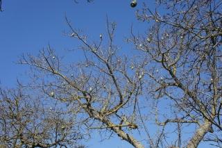Niezbyt bezpieczne drzewo