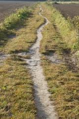 Ścieżka przez pola czyli miedzą do celu