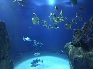Akwarium w Kopenhadze