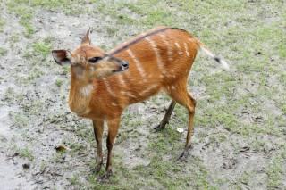 Nad niektórymi wybiegami biegną wysokie podesty - zoo w Nyiregyhaza