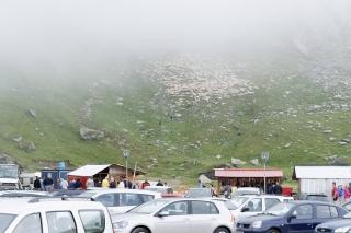 Owce wychodzące z mgły