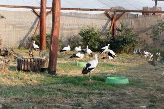 Lecznica dla ptaków w Hortobagy