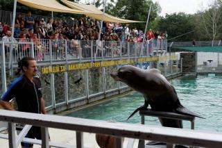 Pokaz w fokarium - zoo w Nyiregyhaza