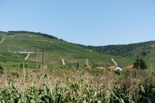 Tokajskie winnice