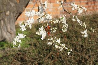 Wiosna wszędzie
